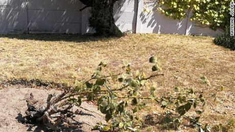 Raymond Joseph's rose bush is dead, a casualty of Cape Town's ongoing water crisis.
