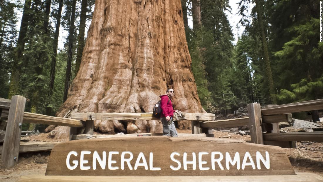 Planning the perfect trip to Sequoia National Park