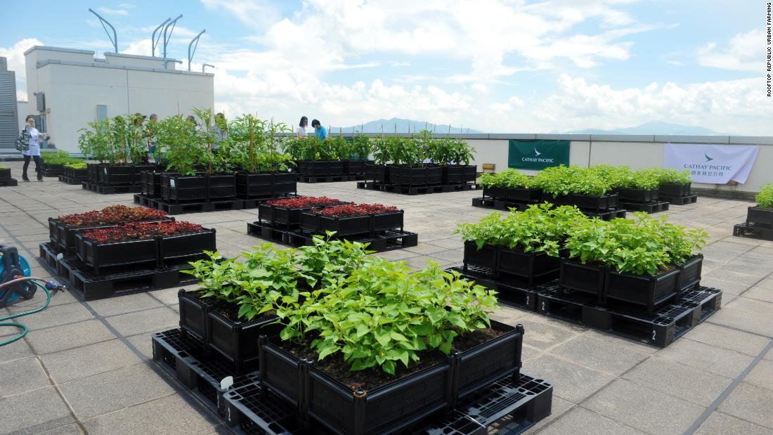 A rooftop farm on airline Cathay Pacific's headquarters in Hong Kong opened in 2016 to give staff the opportunity to grow their own food close to their office. Over 50 varieties of vegetables and herbs were planted.