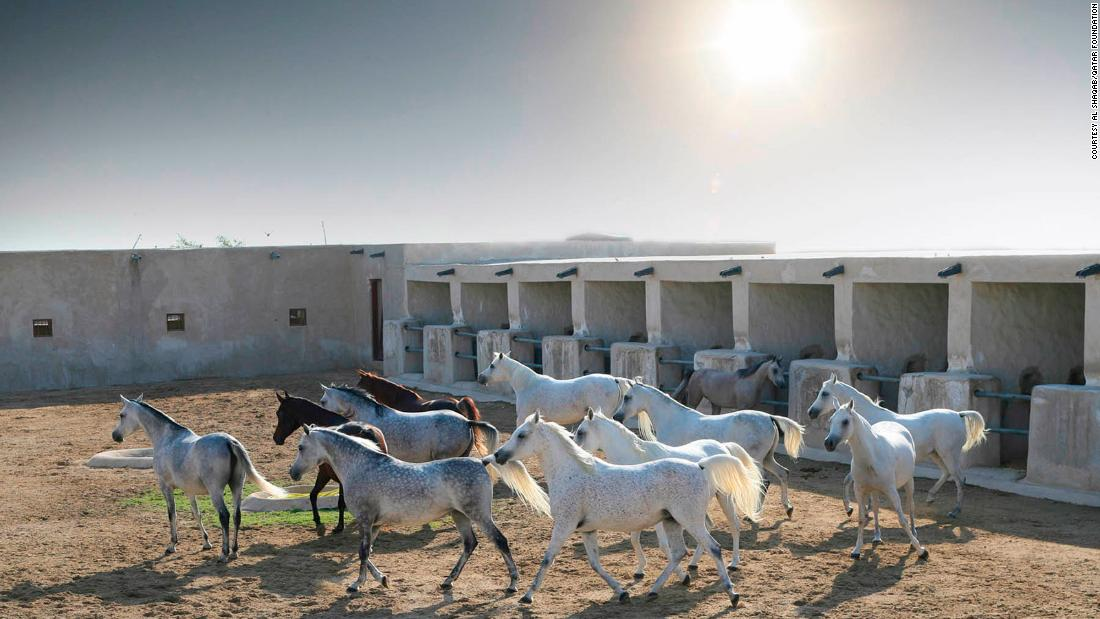 A five-star resort -- for horses