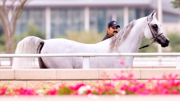 Healthy horses: Al Shaqab's equine residents are looked after by a state-of-the-art veterinary medical center equipped with a hospital, clinic and laboratory.