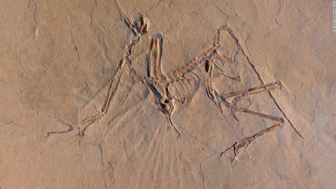 "Researchers have been studying Archaeopteryx fossils for 150 years, but new X-ray data reveal that the<a href=""https://www.cnn.com/2018/03/13/world/flying-dinosaur-archaeopteryx/index.html""> bird-like dinosaur may have been an ""active flyer.""</a>"