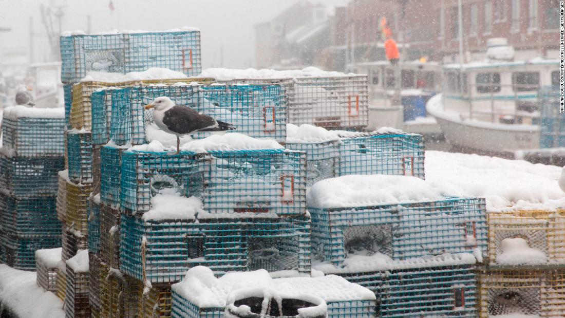 A seagull sits on lobster pots as the snow piles up in Portland, Maine, on March 13.