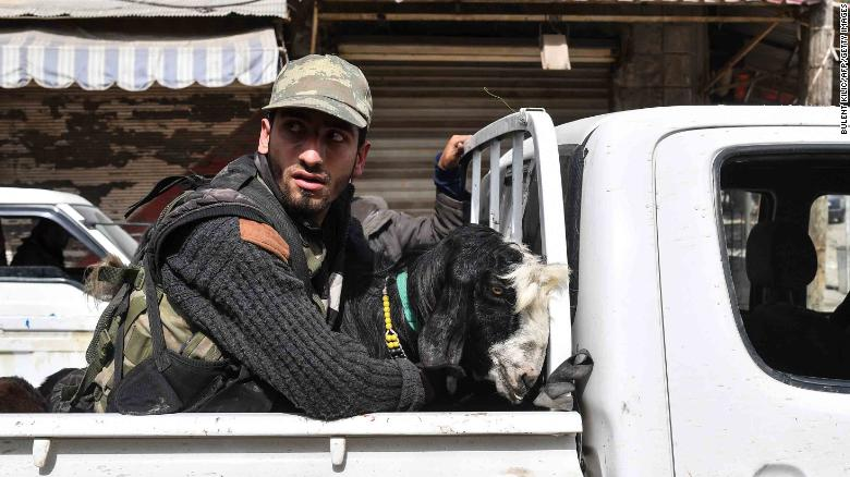 A  fighter rides in the back of a pickup truck with looted livestock.