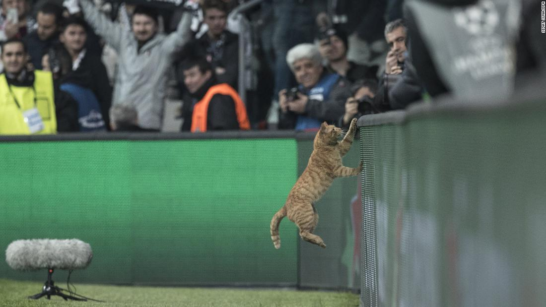 A cat jumps onto an advertisement board during a Champions League soccer match in Istanbul on Wednesday, March 14.