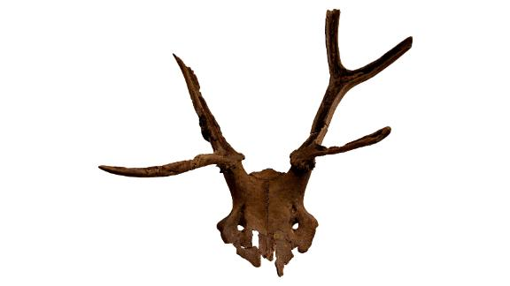 A the red deer antler headdress discovered at Star Carr.