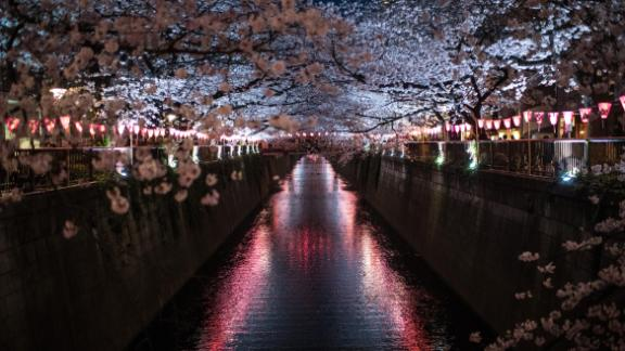 Tokyo, Japan: In this March image, cherry blossom is seen hanging over the Meguro River, one of the best cherry blossom viewing spots in Tokyo, located in the Nakameguro area. The flowers only bloom for around a week, marking the start of spring, before they begin to float off the trees.