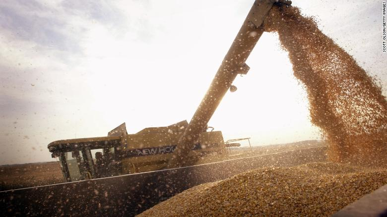 ROCKTON, IL - OCTOBER 9:  John Shedd, 85, loads a container with Bt-corn harvested from his son's farm October 9, 2003 near Rockton, Illinois. Shedd and his son farm 800 acres of the corn on farms in Illinois and Wisconsin. Bt-corn is a GMO (genetically modified organism) crop that offers growers an alternative to spraying an insecticide for control of European and southwestern corn borer. The Shedds sell the corn for use in ethanol.  (Photo by Scott Olson/Getty Images)