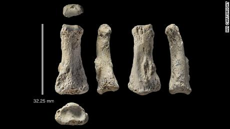 Fossil finger bone from the Al Wusta site, Saudi Arabia.