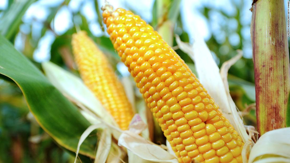 Less than 2% of sweet corn, the second-cleanest produce, showed detectable levels of pesticides. Because a small portion of corn is grown from genetically modified seeds, the group suggests that those who wish to avoid genetically altered foods buy organic corn.