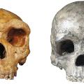 ancient finds human hominin skulls