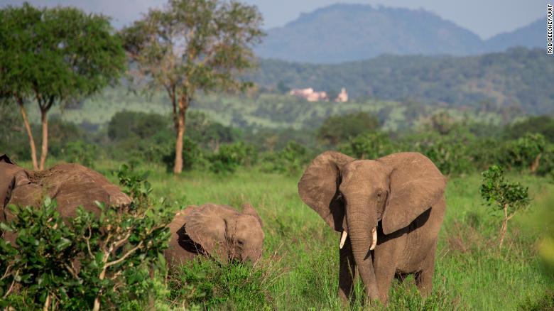 Tanzania tar historiskt steg för att rädda svindlande elefantbefolkning