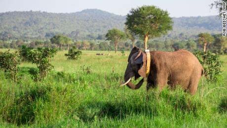 Tanzania takes historic step to save dwindling elephant