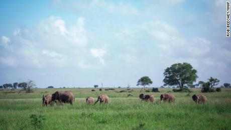 A herd of elephants in Mikumi National Park, Tanzania.