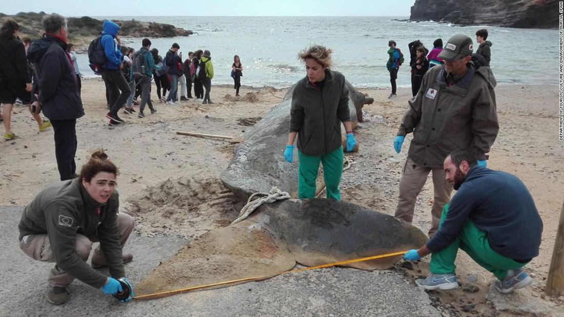 A sperm whale that washed up on a beach in Spain had 64 pounds of plastic and waste in its stomach – Trending Stuff