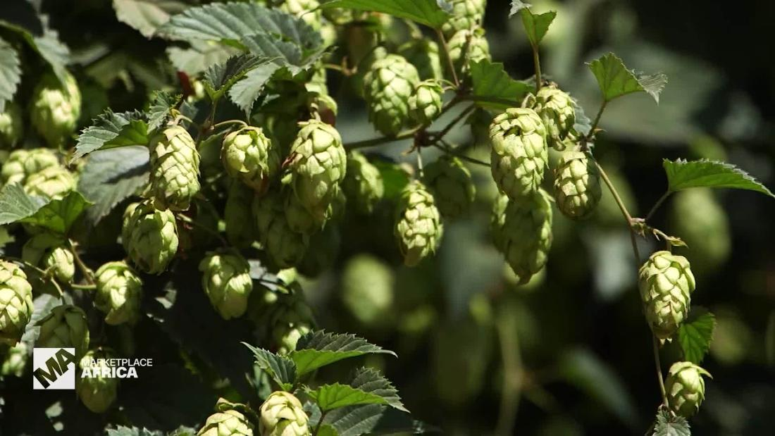 South Africa's hops industry - CNN Video
