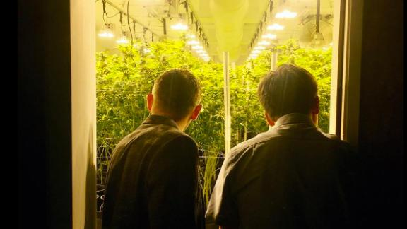 Newsom and his manufacturing partner from Kaizen Medicinals were pleased with the way the plants were growing.