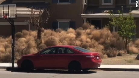 Tumbleweeds California
