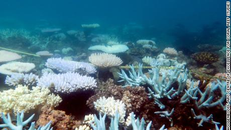 The Great Barrier Reef Is Not Actually Dead Cnn