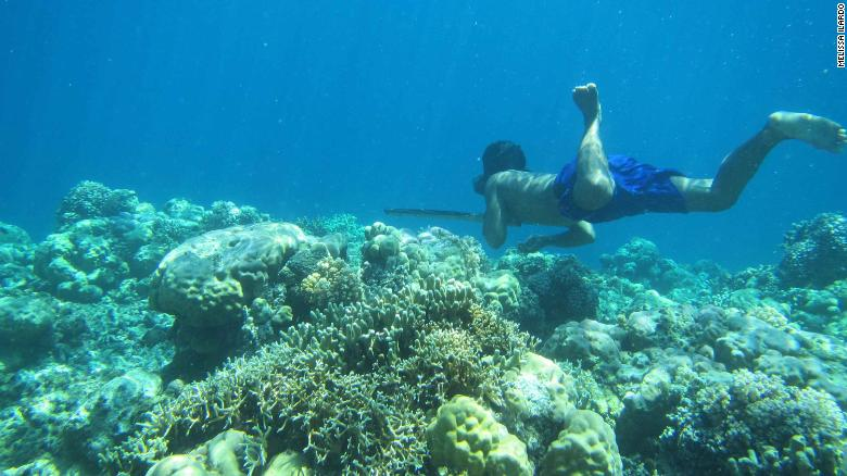 Why Bajau divers can hold their breath for minutes