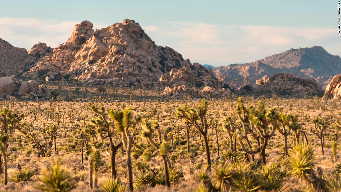 The park's namesake comes from the Joshua Tree, agave plants with arm-like branches named by Mormon immigrants. They said the outstretched limbs reminded them of Joshua reaching his hands to the sky in prayer.