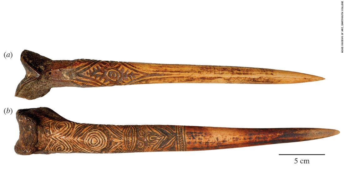 At one time, warriors in New Guinea used bone daggers in battle. While some daggers were made using the thigh bone of a large flightless bird called a cassowary (b) others were made from a human thigh bone (a).