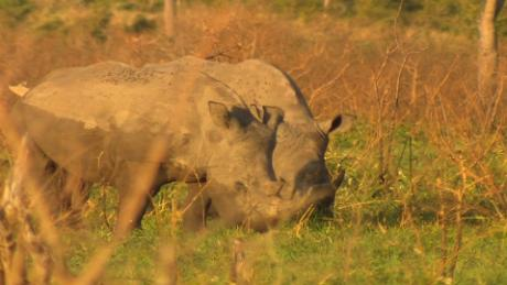 black rhinos project chad kriel pkg nr_00011126