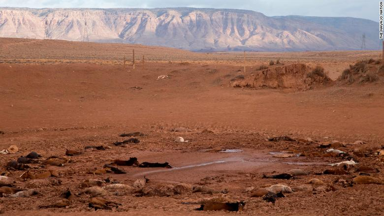 Approximately 191 feral horses were found dead at a stock pond on Navajo land in Arizona.