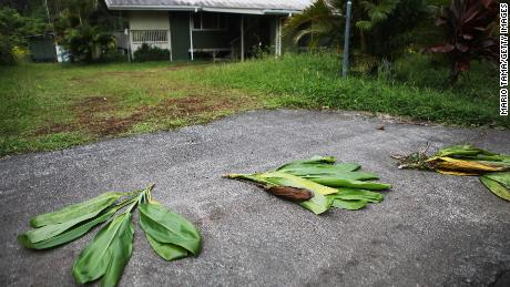 Ti leaves are left in front of a home located near a lava flow in the Leilani Estates neighborhood on Monday. The leaves are an offering to Pele, the Hawaiian volcano goddess.