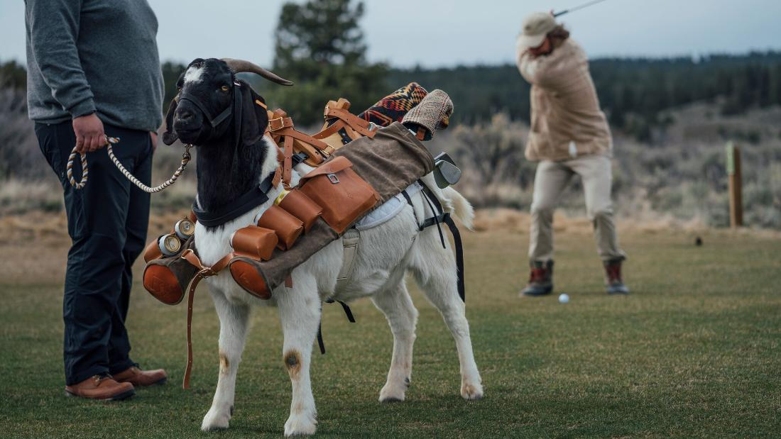Meet Bruce LeGoat. He's four years old and probably the best goat golf caddy in the world.