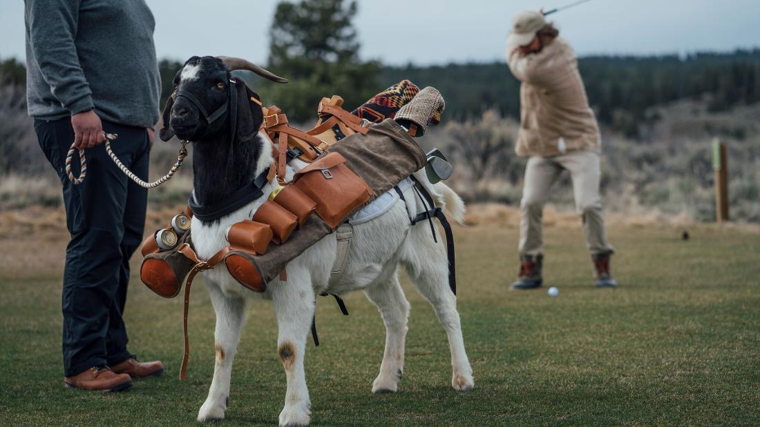 The Worlds First Goat Golf Caddies - Cnn-1919