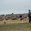Goat Golf Caddy 07