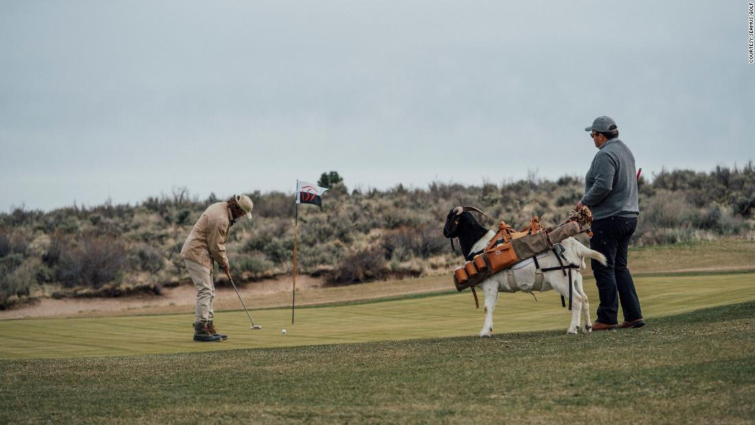 The ranch says the goat is trained to do all the things you would want a caddy to do -- without lying down on the job.