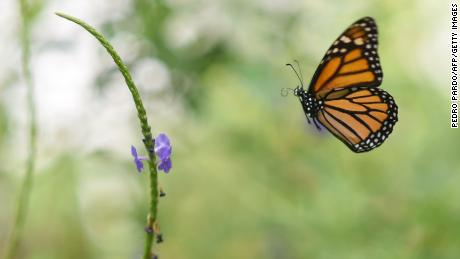 'Catastrophic consequences' to nature from insect decline