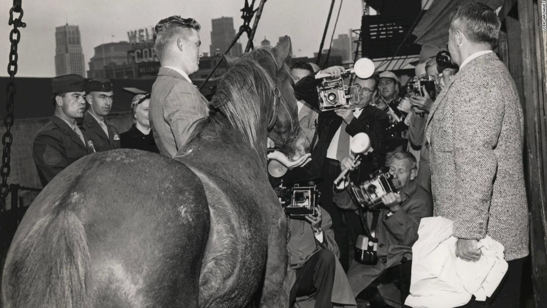 She was bought by a lieutenant for $250 at Seoul racetrack in 1952. She was originally bred as a racehorse.