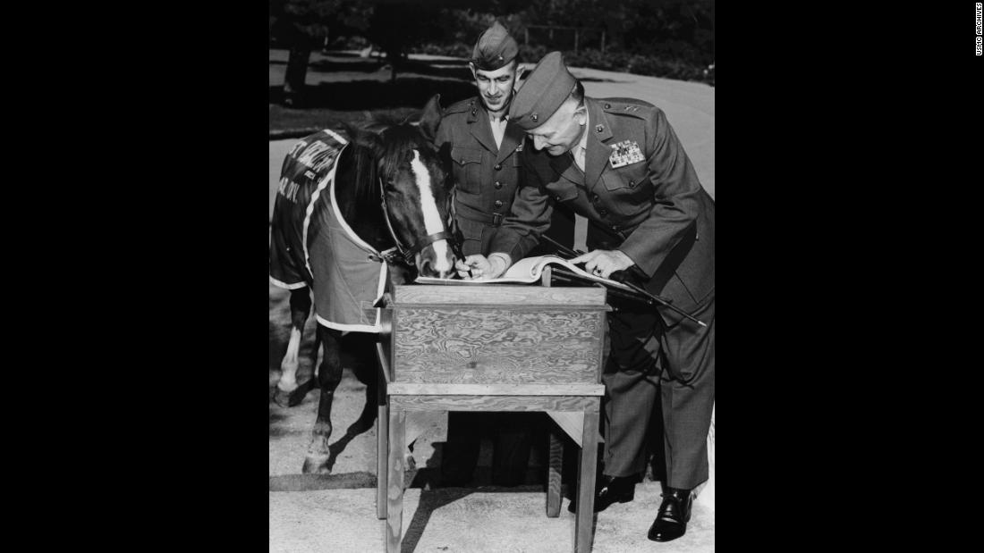 "Reckless, who would sleep in the soldiers' tents at night, also endeared herself to her fellow Marines in a different way. ""Reckless had a voracious appetite,"" Robin Hutton, president of the Sgt. Reckless Memorial Fund and author of a book about the horse, wrote on a website dedicated to her. ""She would eat anything and everything -- but especially scrambled eggs and pancakes in the morning with her morning cup of coffee."""