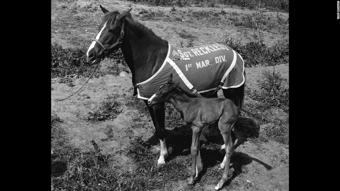 Having twice been promoted to staff sergeant, Reckless would spend the rest of her life at Camp Pendleton in California, where she gave birth to one filly and three colts.