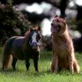 Thumbelina smallest horse 4