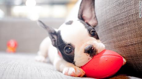 La possession d'un chien réduit le risque de mort précoce de 24%, note la science