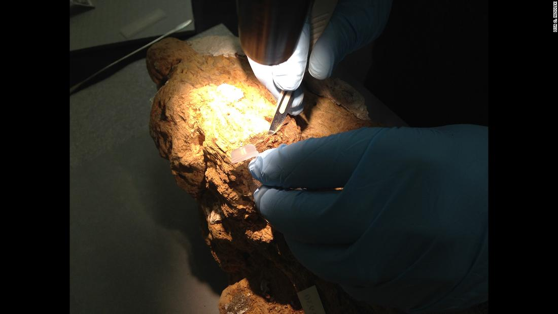 Field Museum conservator J.P. Brown carefully removes material from a resin block for dating.