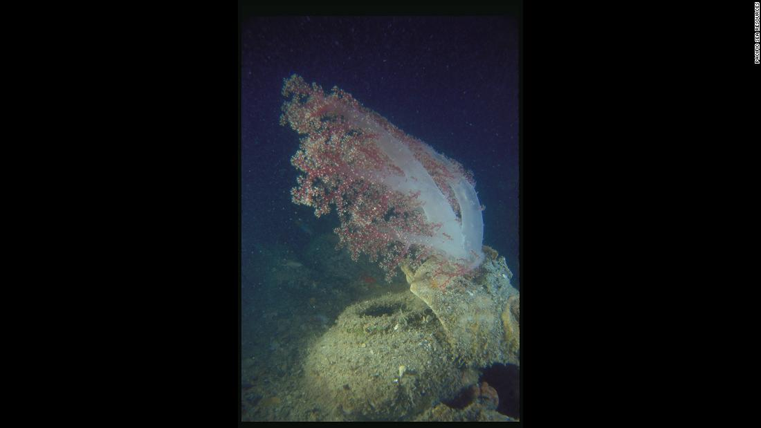 Marine life grew around the exposed cargo, like what's adhered to a piece of a ceramic storage jar.
