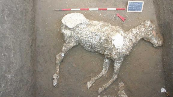 A special plaster casting technique enabled scientists to reconstruct the remains of a horse in Pompeii.