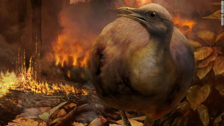 The asteroid impact that eliminated non-avian dinosaurs destroyed global forests. Here, a hyopothetical surviving bird lineage -- small-bodied and specialized for a ground-dwelling lifestyle--flees a burning forest in the aftermath of the asteroid strike.
