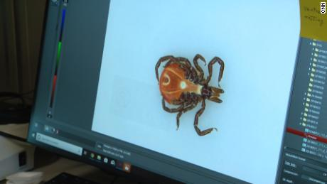 A tick at the University of Massachusetts' TickReport laboratory.