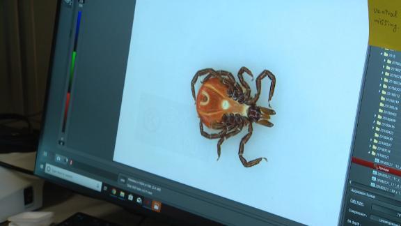 A tick at the University of Massachusetts' TickReport laboratory.
