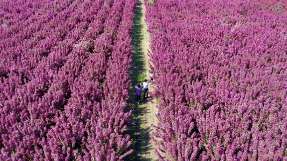 Laoting County, China: Tourists explore an ecological landscape area in Laoting County in north China