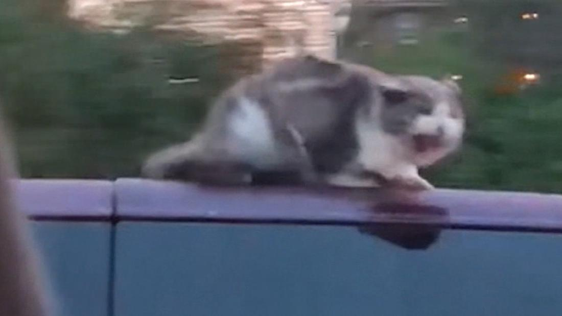 Cat Clings To Car Roof At 60mph Cnn Video