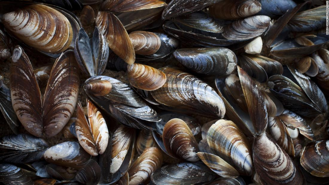 mussels from puget sound test positive for opioids other drugs cnn
