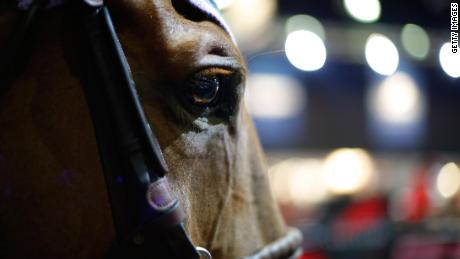 LOS ANGELES, CA - SEPTEMBER 28:  A detailed view of a horse during the Longines Los Angeles Masters at Los Angeles Convention Center on September 28, 2014 in Los Angeles, California.  (Photo by Joe Scarnici/Getty Images for Masters Grand Slam Indoor)