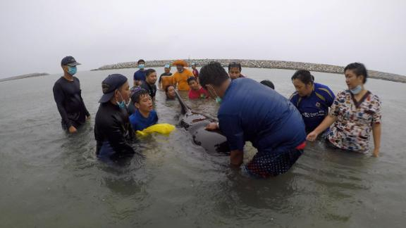 ThaiWhales volunteers and government marine veterinarians work to treat the sick whale.